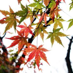 散歩途中の紅葉。