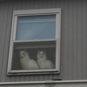 今日もいるかな~。と見てしまう窓