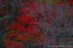 甲子温泉周辺の紅葉風景(福島県西白河郡西郷村大字小田倉字)