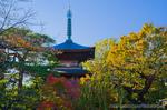 秋の豪徳寺三重塔(東京都世田谷区豪徳寺)