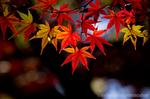 多摩川台公園の紅葉(東京都大田区田園調布)
