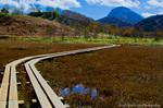 田ノ原湿原周辺の紅葉風景(長野県下高井郡山ノ内町)