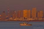 朝陽受ける湾岸タワーマンション群と東京湾の漁風景(千葉県浦安市千鳥)