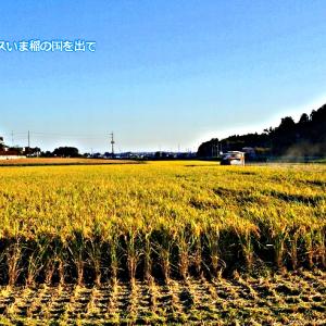 季語の座「稲」