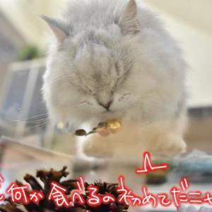 猫好きさんへこの撮影を…✨