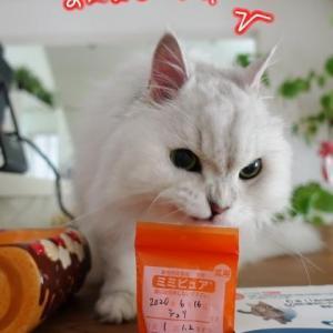 誕生日だね、おめでとうシュリ(#^^#)