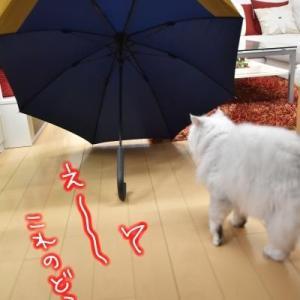 見た事ないでしょ、この【万能 傘】