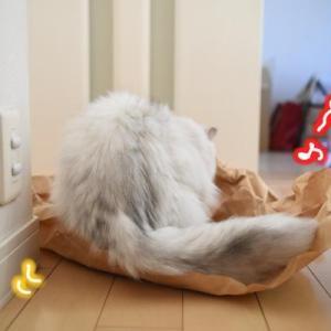 猫さんが好きなこのクッシャクシャの…