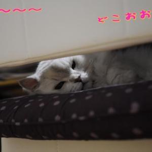 ルンコタレちゃんどこぉ~(^○^)