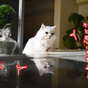 猫な醍醐味!