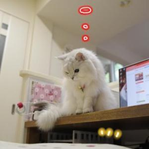 白猫さんが座るのに…