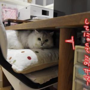猫も葉っぱも座布団も…モォ!!