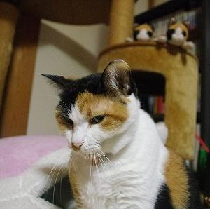 11/21 前編(マカロン猫ベッドの前で)