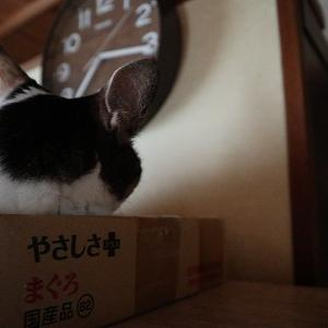 7/12 前編(目ヤニと鼻水がすっきりしない)