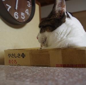 7/13 前編(猫ハウスに入った♪)