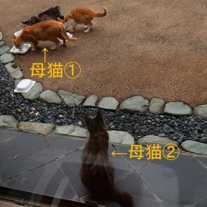 7/26 後編(ひょっとしてキミも何かある?)