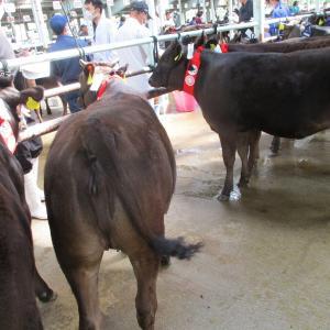 但馬家畜市場 7月セリ市の結果です。