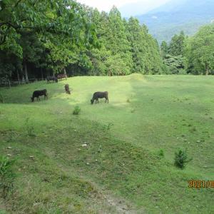 淡路 8月子牛セリ市のご案内です