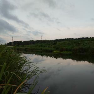 千葉 八千代 印旛沼水系 バス釣り
