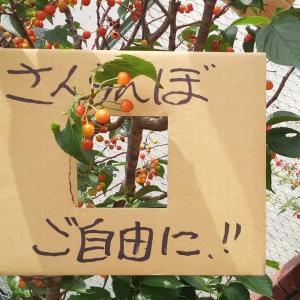 【古墳めぐり】 No.5711