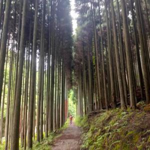 【京都トレイルをとっかかりにして】 No.5779
