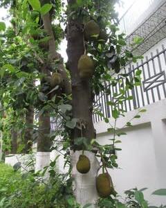 フルーツの季節(チョットグラム)