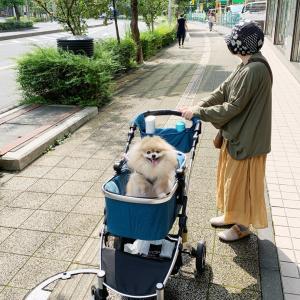 わんにゃんドーム2019②