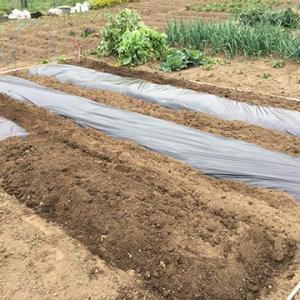 第二農園 畝立・マルチ・播種