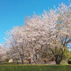 桜と裕次郎