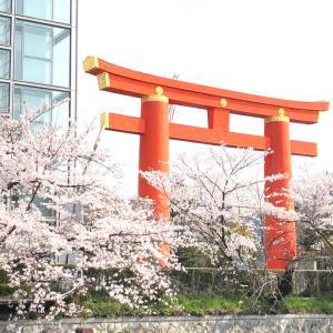お花見②  平安神宮〜円山公園