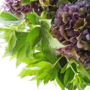 アンティーク紫陽花の季節
