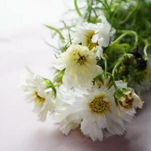 きょうのお花について