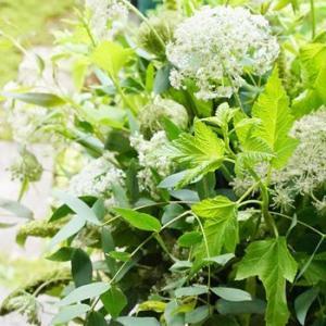 yumisaitoparisグリーンのブーケシャンペトル