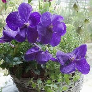 鉢植えと蘭のコンポジション