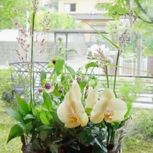 今季ラストの鉢植えレッスン+α