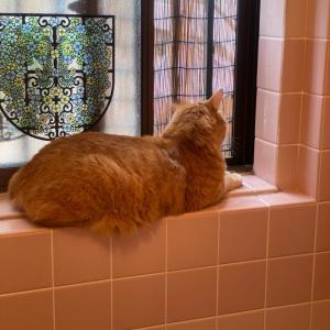 お風呂小僧。