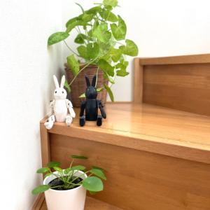 階段に緑*