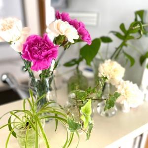 新しいお花*