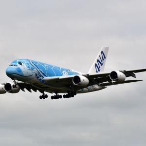ANA FLYINGHONU 全日空A380フライングホヌ 一号機