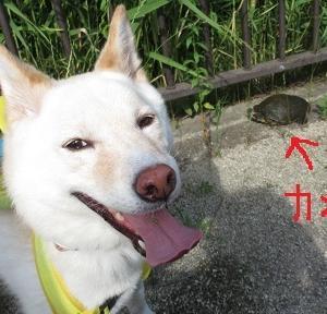 捨て琉球MIX預り日誌102 talk with tortoise
