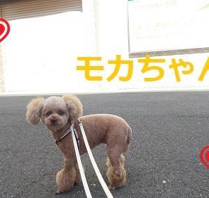 【モカちゃん編】