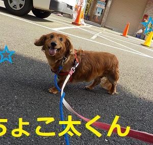 【ちょこ太くん編】
