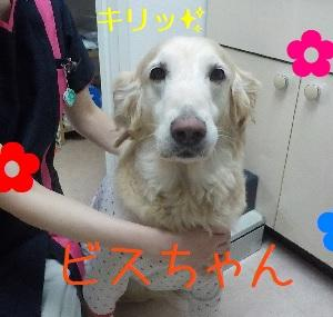 【ビスちゃん編】