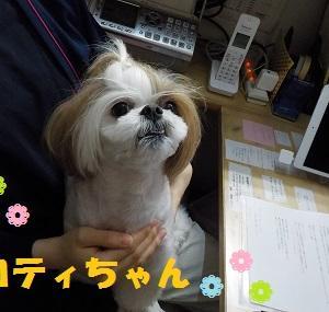 【ロティちゃん編】