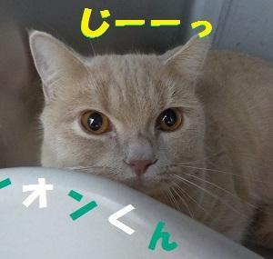 【レオンくん、ルカくん編】