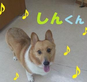 【しんくん編】