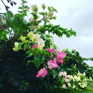 内地は春、石垣島はうりずん