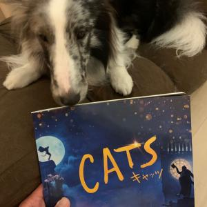 映画版「キャッツ(CATS)」早速観てきたぜぃ!
