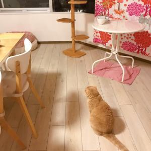 台風の夜の猫たち