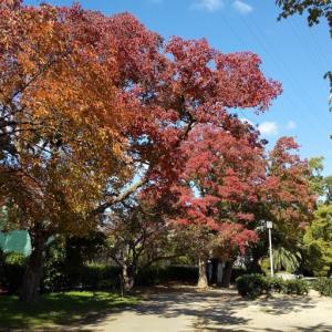 紅葉の季節♪